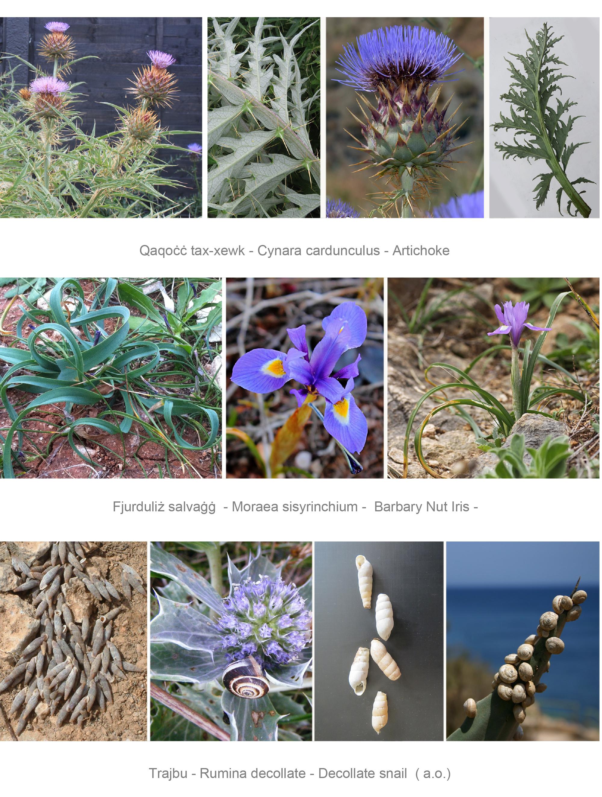 flora and fauna studies